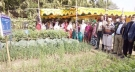 শেরপুরে বসতবাড়ির আঙিনায় সবজি উৎপাদন মাঠ দিবস অনুষ্ঠিত
