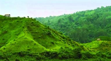 দূরদিগন্তের বন-পাহাড়