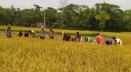 কটিয়াদীতে বাণিজ্যিক কৃষিতে সফল তিন শিক্ষিত তরুণ